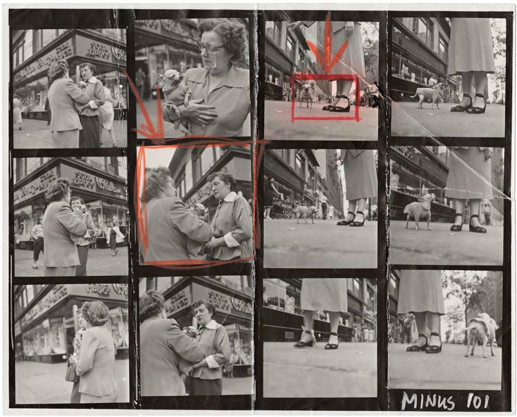 Contact-Sheet-Print-Elliott-Erwitt-Chihuahua New York City 1946/Magnum Photos