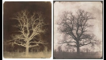 William Henry Fox Talbot, An oak tree in winter, Lacock Created:c.1842-43 Format:Calotype negative and salted paper print Creator:William Henry Fox Talbot -Held by:British Library Usage terms:Public Domain Shelfmark